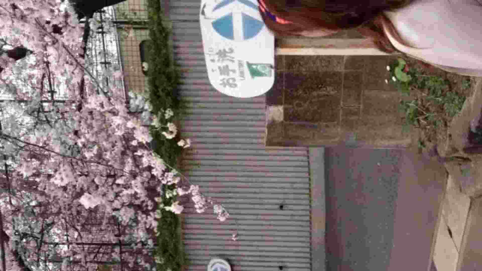 23(19日目)桜を見ながらお散歩 一般投稿  100連発 2