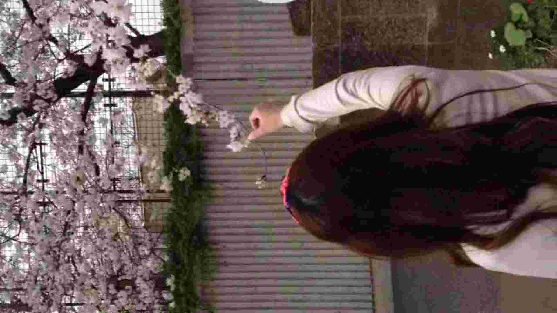23(19日目)桜を見ながらお散歩 一般投稿  100連発 3
