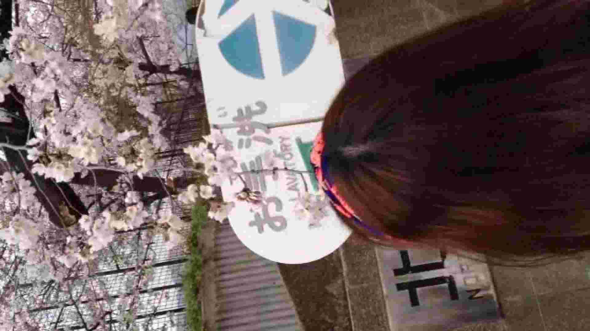 23(19日目)桜を見ながらお散歩 一般投稿  100連発 4