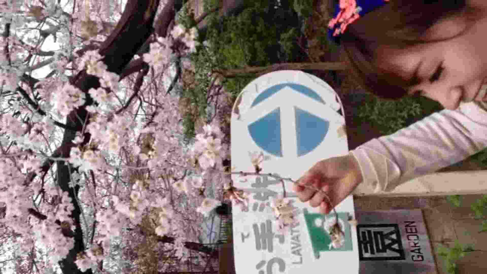 23(19日目)桜を見ながらお散歩 一般投稿  100連発 5