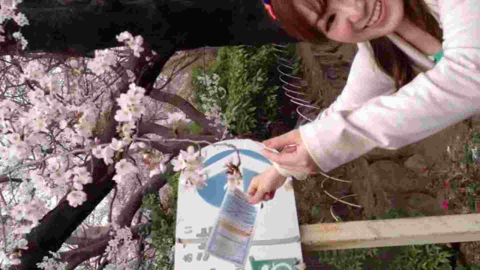 23(19日目)桜を見ながらお散歩 一般投稿  100連発 9