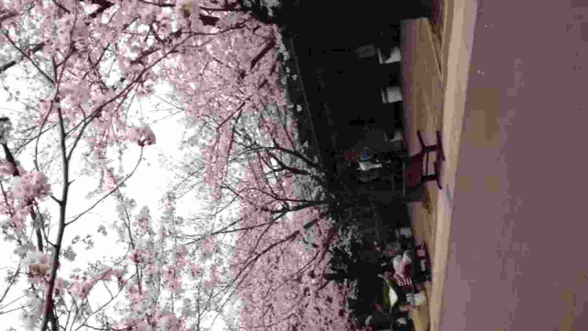 23(19日目)桜を見ながらお散歩 一般投稿  100連発 11