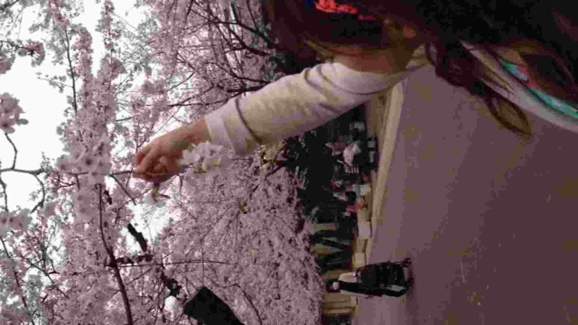 23(19日目)桜を見ながらお散歩 一般投稿  100連発 16