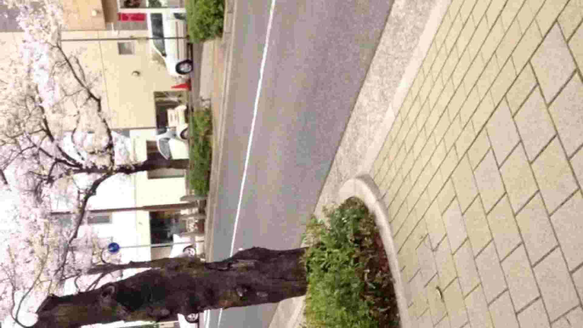 23(19日目)桜を見ながらお散歩 一般投稿  100連発 50